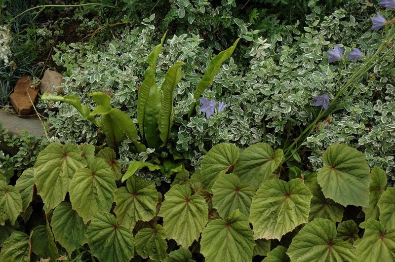Piante Tappezzanti Ombra : Giochi di verde o declinare il giardini in viaggio