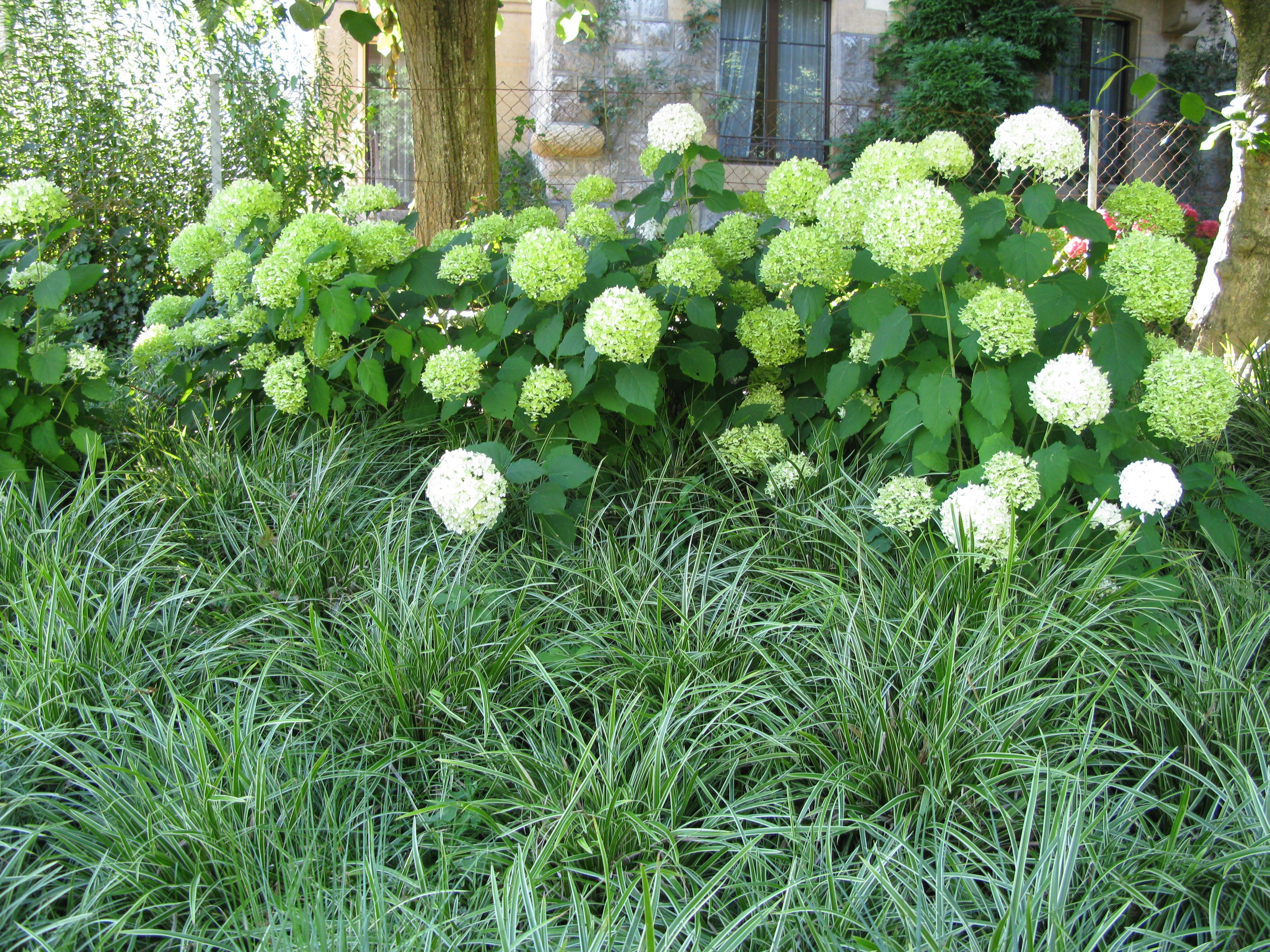 Piante Tappezzanti Ombra : Piante da ombra giardini in viaggio