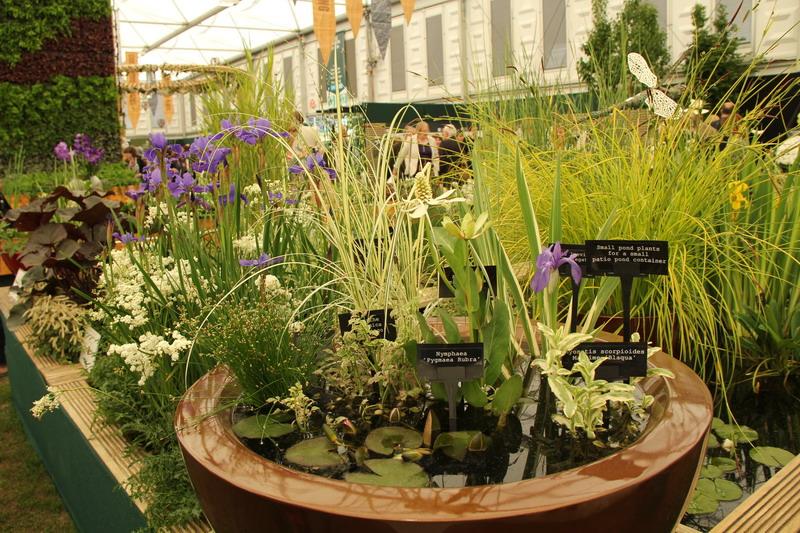 Chelsea flower show le piante giardini in viaggio for Fiori acquatici