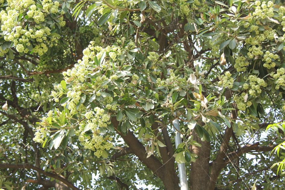 passaggio in india alberi e arbusti fioriti giardini in