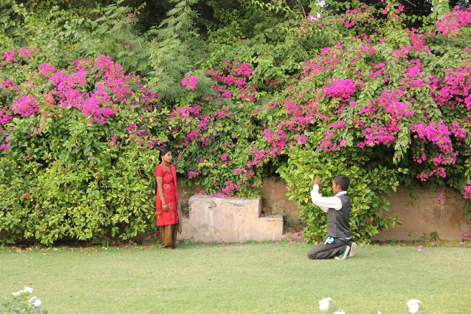 Passaggio in india alberi e arbusti fioriti giardini in for Piccoli giardini fioriti
