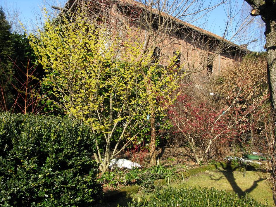 giardino febbraio