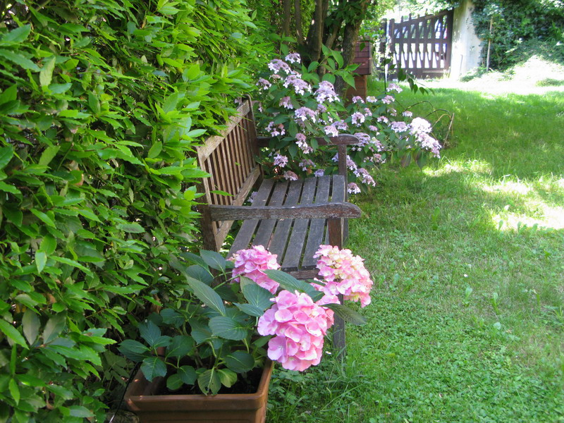 Il mio giardino nel mese di giugno giardini in viaggio