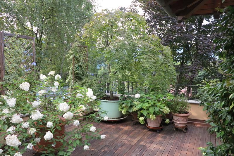 Giardino lago maggiore giardini in viaggio - Giardini sui terrazzi ...