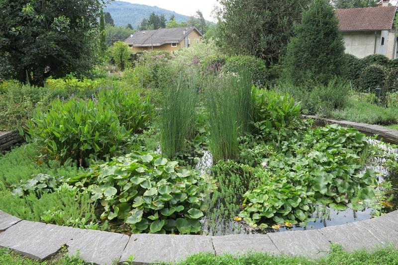 Un giardino davvero speciale giardini in viaggio for Laghetto con ninfee