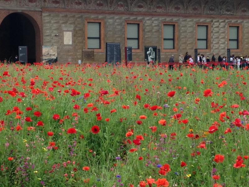 Prati fioriti giardini in viaggio - Foto di giardini fioriti ...
