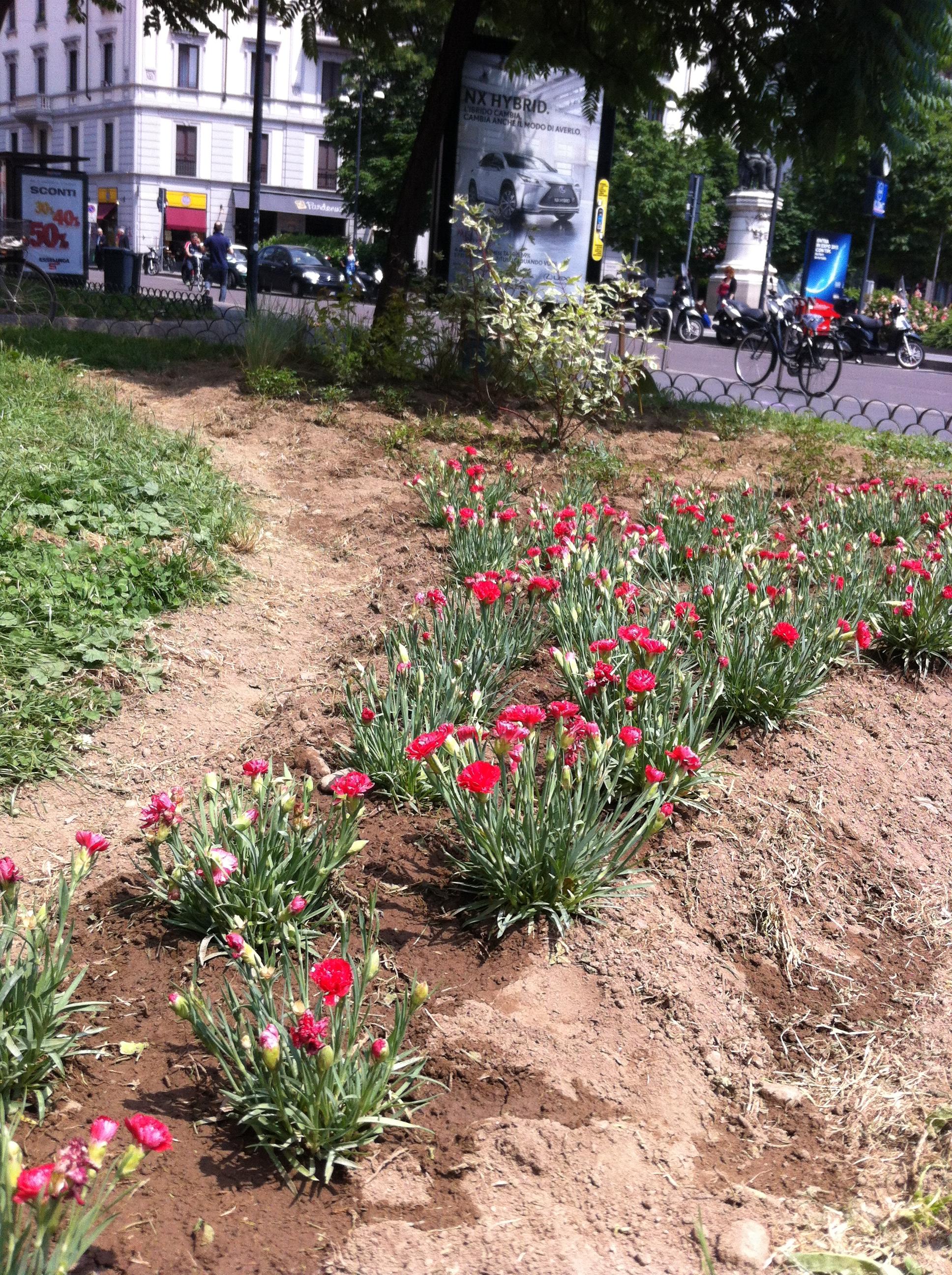 Creare aiuole affordable come creare un bel giardino with - Come creare un bel giardino ...