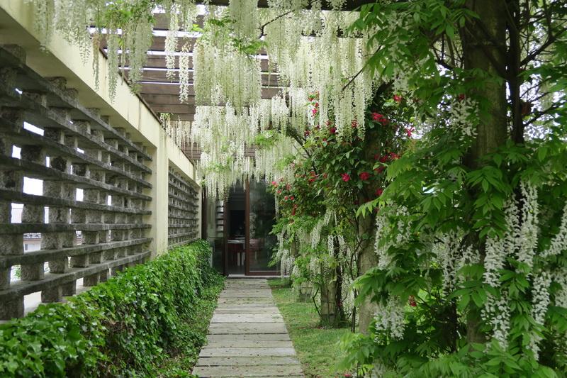 Conce dei rododendri giardini in viaggio for Pietro porcinai
