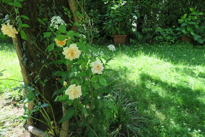 Il mio giardino a laveno giardini in viaggio