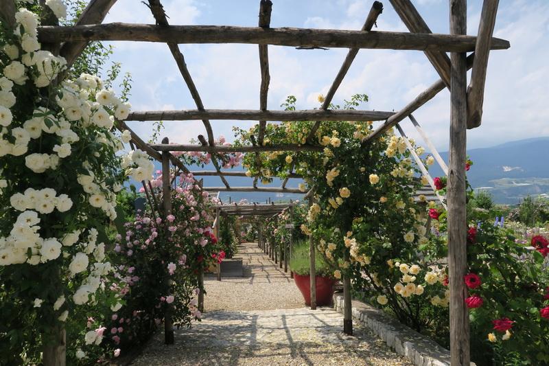 Un roseto alpino da non perdere: il giardino delle rose a ronzone in