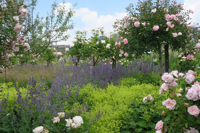 Un roseto alpino da non perdere il giardino delle rose a - Giardino con rose ...