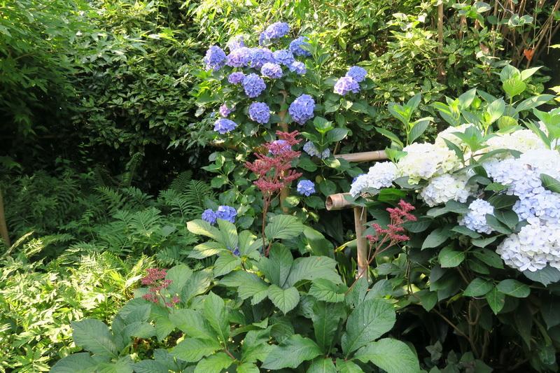 Un giardino all insegna di piante particolari giardini - Giardini particolari ...