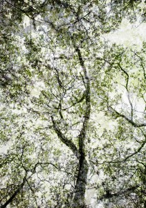 Forest: una bella mostra che consiglio vivamente