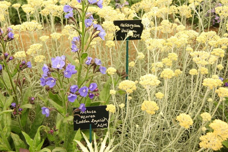 Chelsea Flower Show: le piante