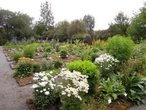 Fuochi d'artificio islandesi: gli orti botanici di Federica Raggio