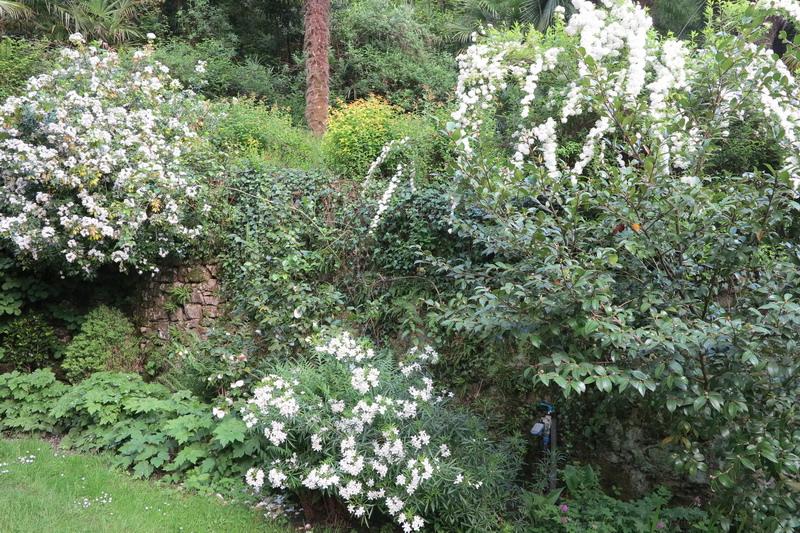 Fioriture nel mio giardino sul lago