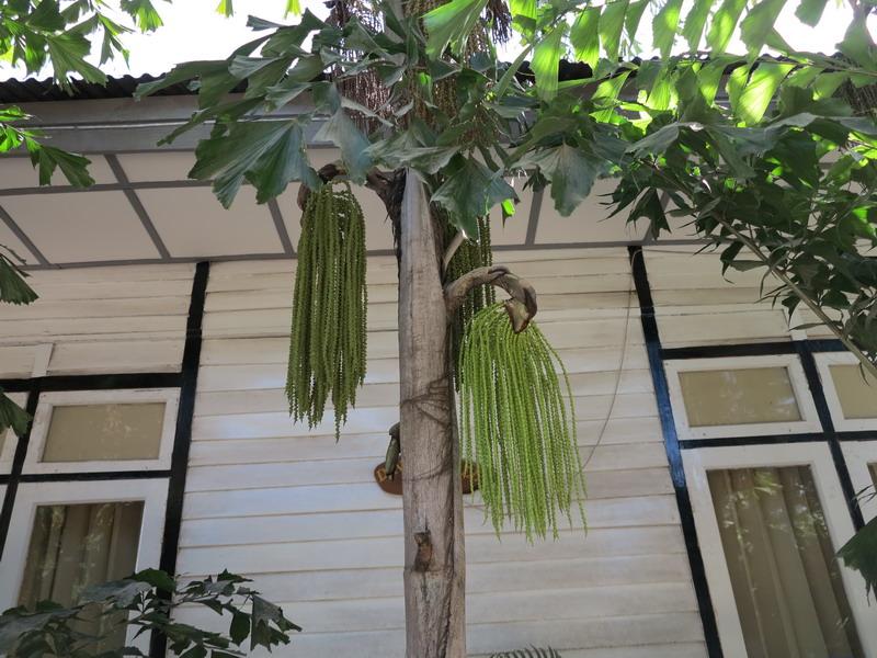 Giorni birmani: vegetazione, IV