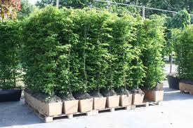 Quick hedge