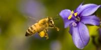 Un appello sulla scomparsa delle api di Avaaz