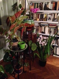 Poesia in giardino di aprile 2015