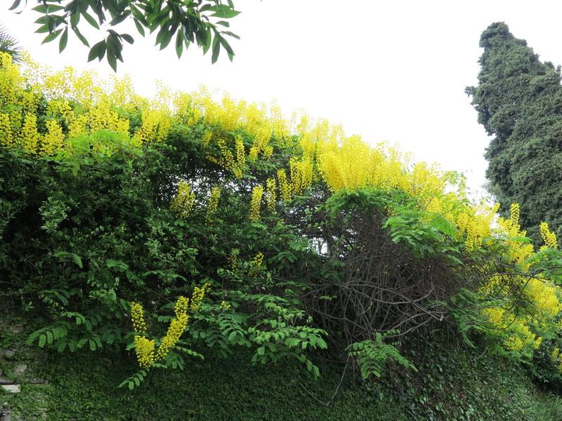 Il giardino di Villa La pergola ad Alassio