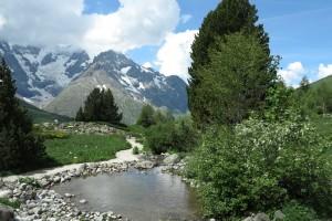 Jardin alpin du Col de Lautaret
