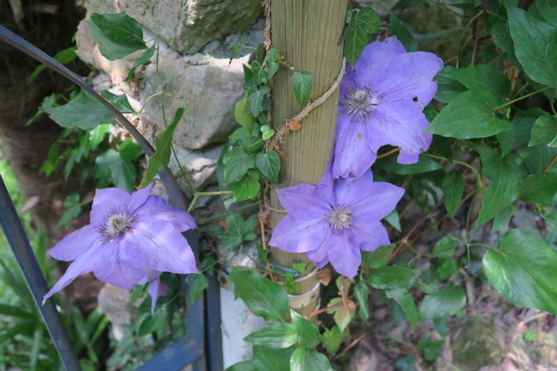 Il mio giardino a Laveno