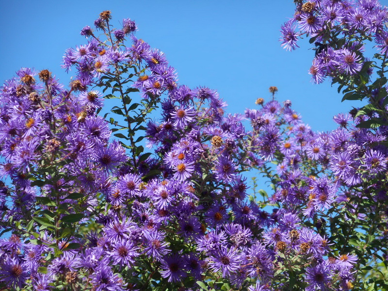 I bulbi e le fioriture autunnali. Foto di Flavia De Petri