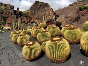 Jardin de cactus, opera di César Manrique, isola di Lanzarote, Canarie. Foto di Franco Backhaus.