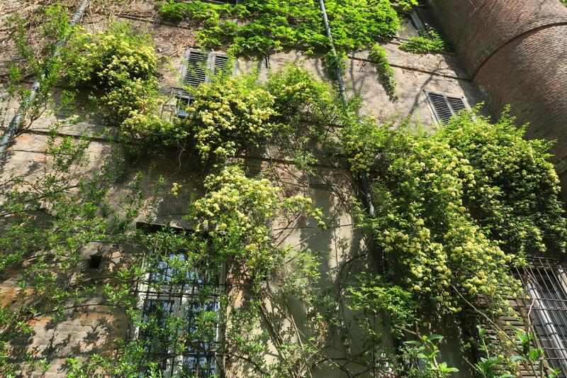 Fascination of plants day all'Orto botanico di Brera e di città studi