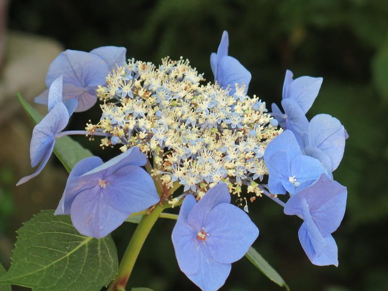 Un giardino all'insegna di piante particolari