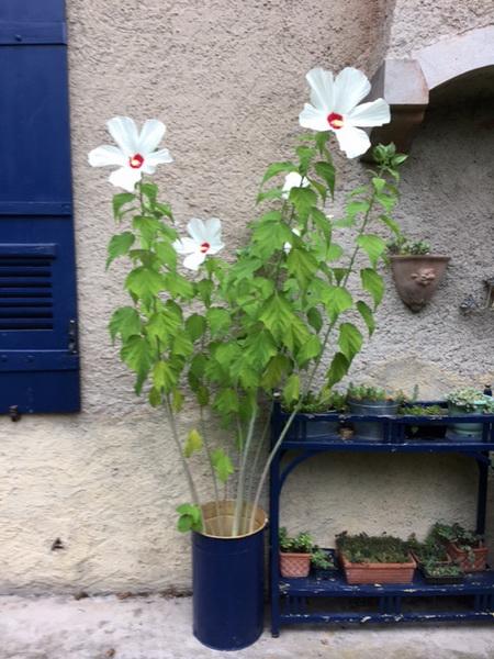 Agosto nel giardino