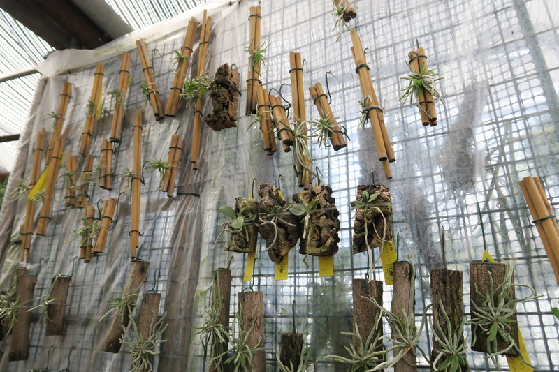 Orchideria di Pozzi a Morosolo
