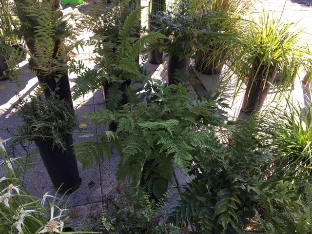 Trifolia 2017 torna ad Arona.