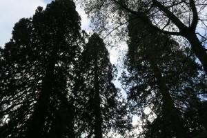 Cotswold: arboreti, parchi paesaggistici