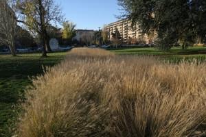 Spazi verdi a Milano d'inverno