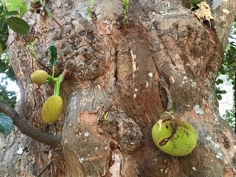 Laura Guarneri da Sri Lanka: l'orto botanico di Kandy