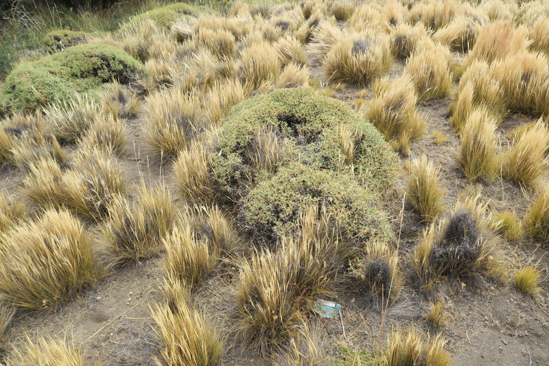 Flora della Patagonia