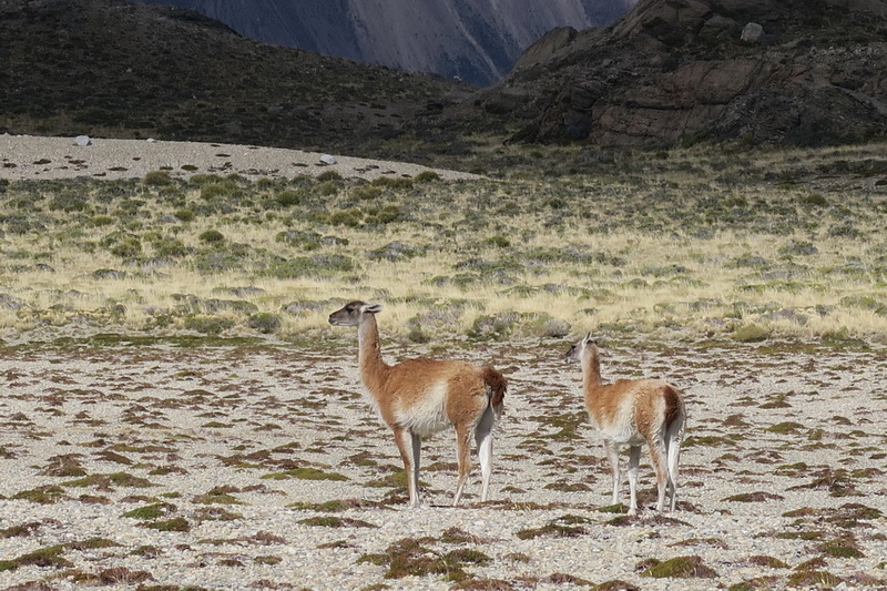 Fauna della Patagonia