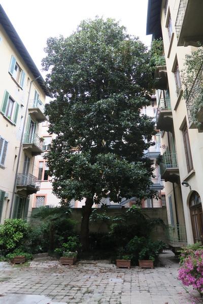 Prima e dopo la 'cura' di Mastro garden, cosiddetto giardiniere di San Giuliano Milanese