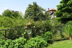 Fioriture a Laveno nel mio giardino