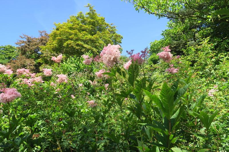 Scoperte botaniche nel mio viaggio in Normandia