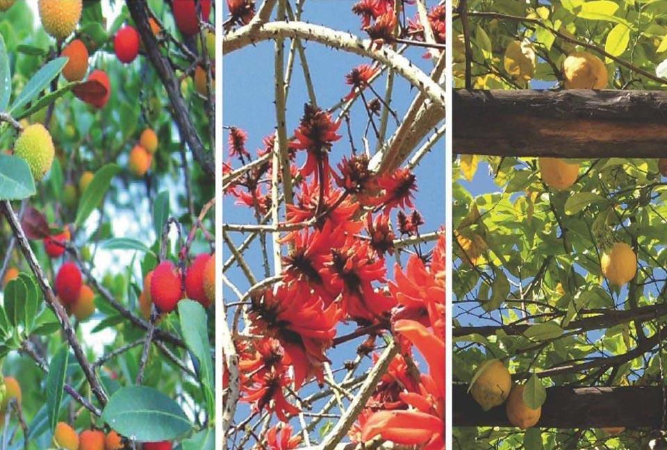 Conferenza Preludi mediterranei e tropicali nella flora milanese del global warming