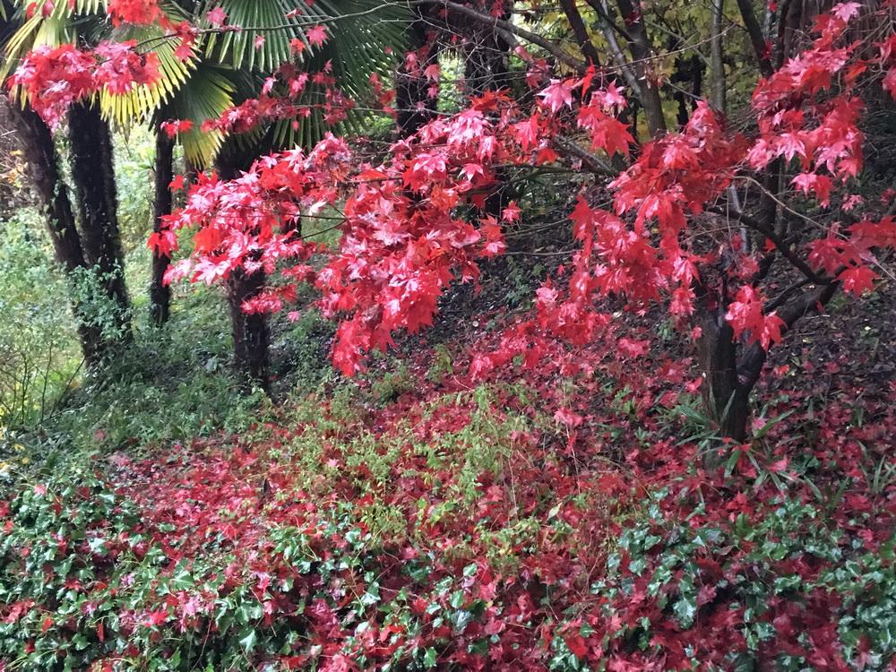 giardino autunnale Laveno