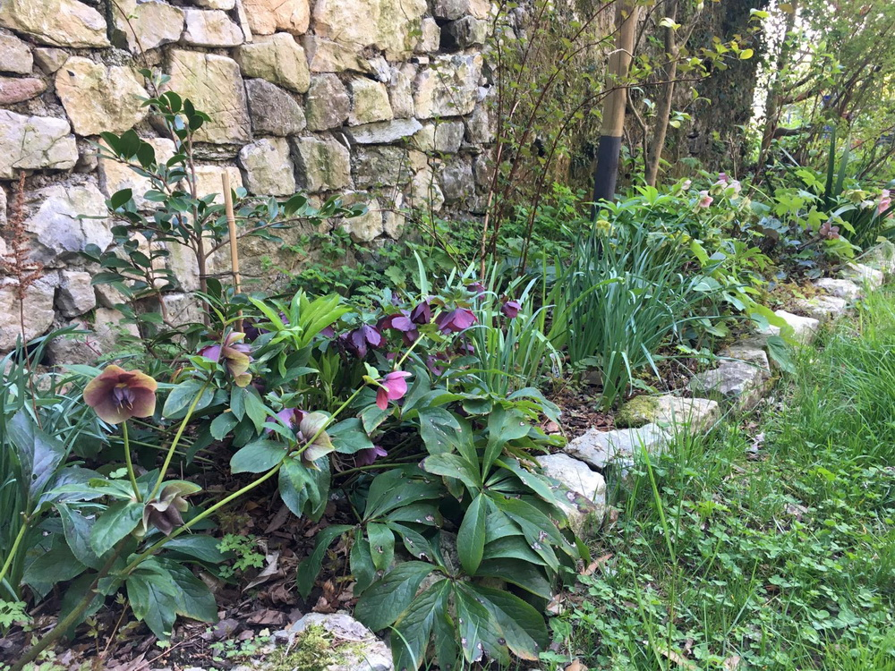Video lezioni di plant design: siepi e vegetazione sotto chioma