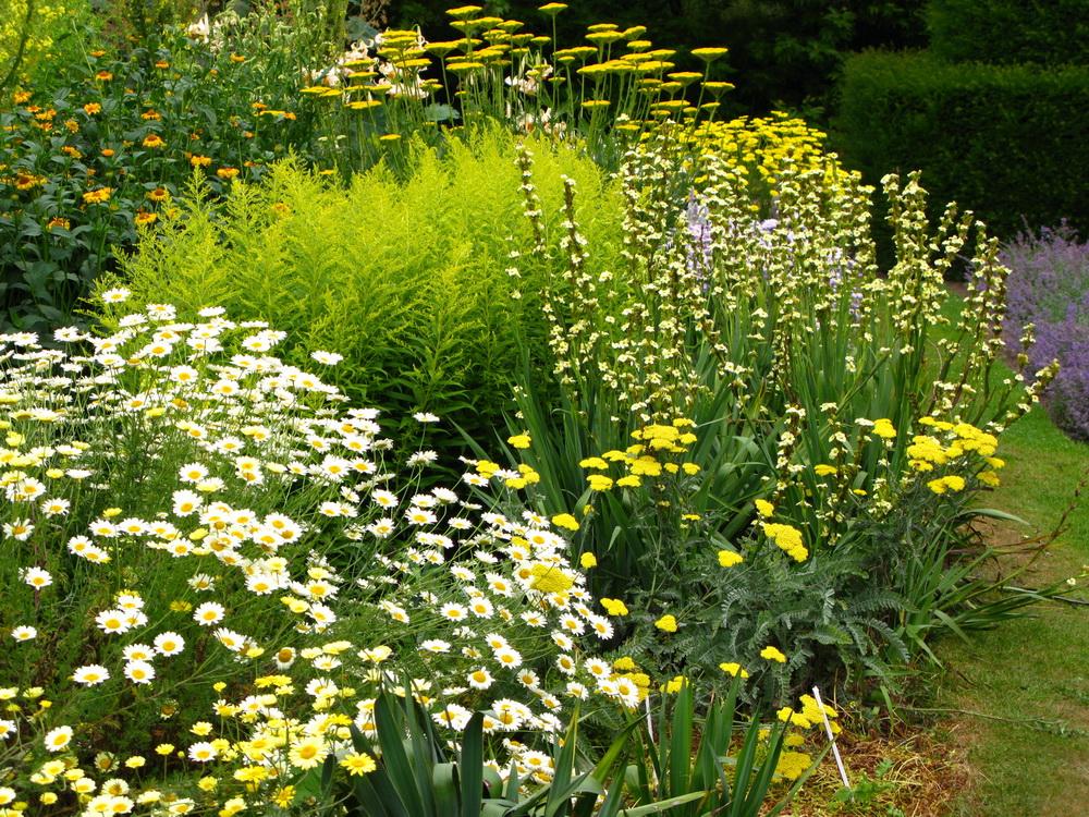 Video lezioni di plant design: accostamenti in giallo e rosso e piante alpine