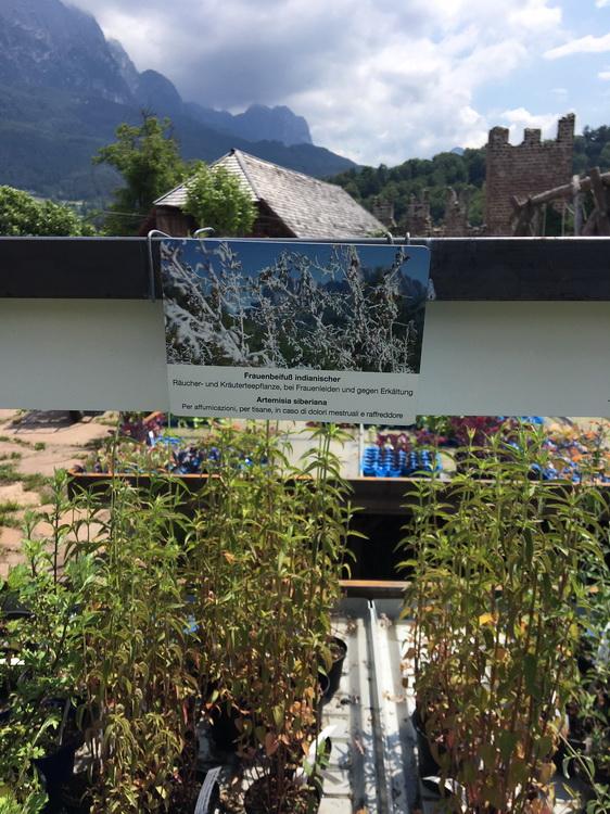 Pflegerhof: un vivaio di erbe aromatiche in Alto Adige