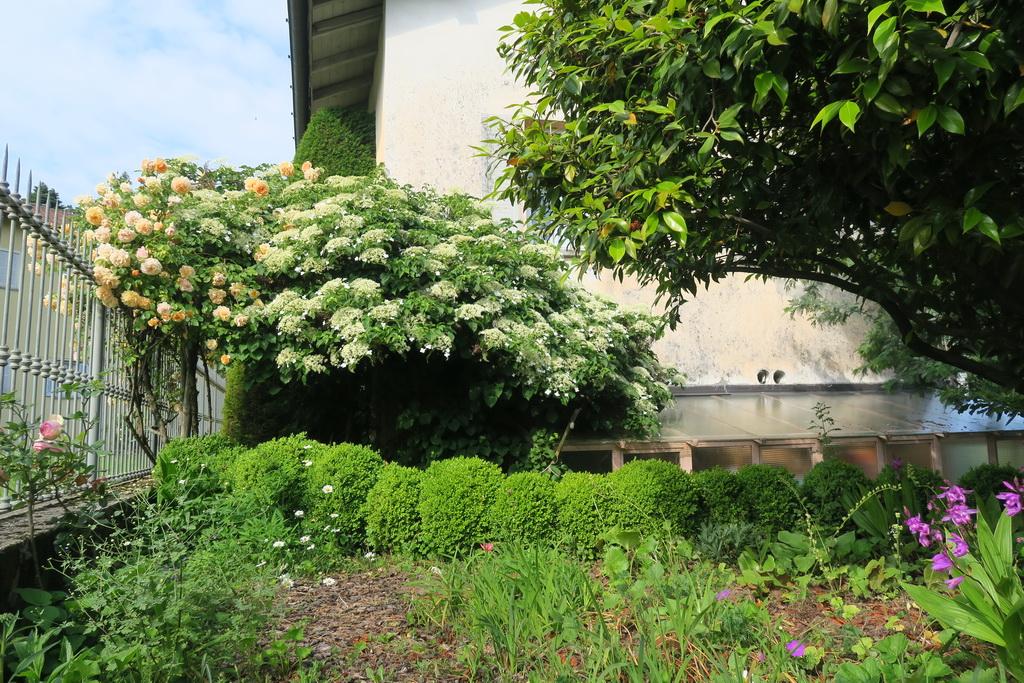 Primavera nel magico giardino di Maria Grazia Campagnani a Brezzo di Bedero