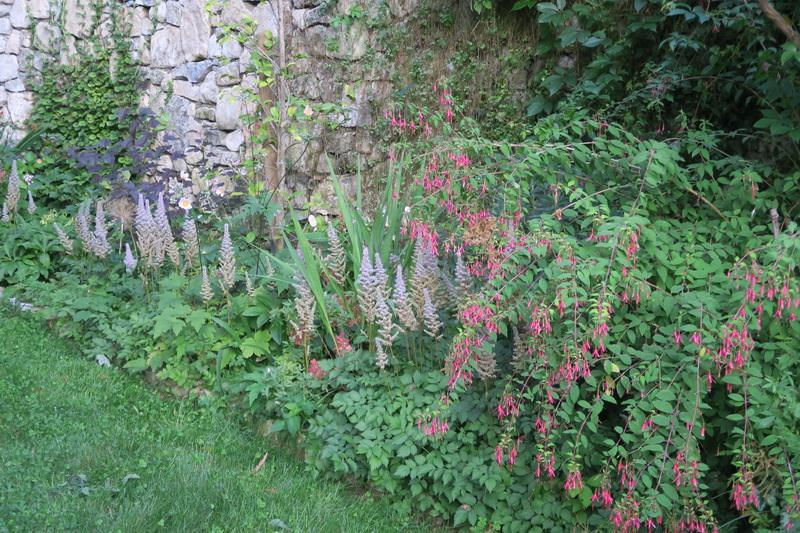 Il mio giardino in estate: qualche immagine di metà estate