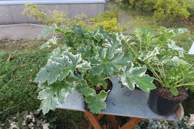 Orticolario 2019: piante che mi hanno colpito
